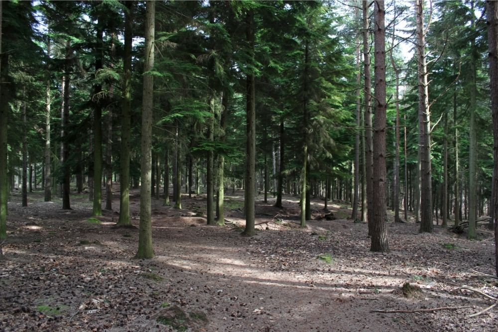 Take in beautiful nature at Swinley Forest