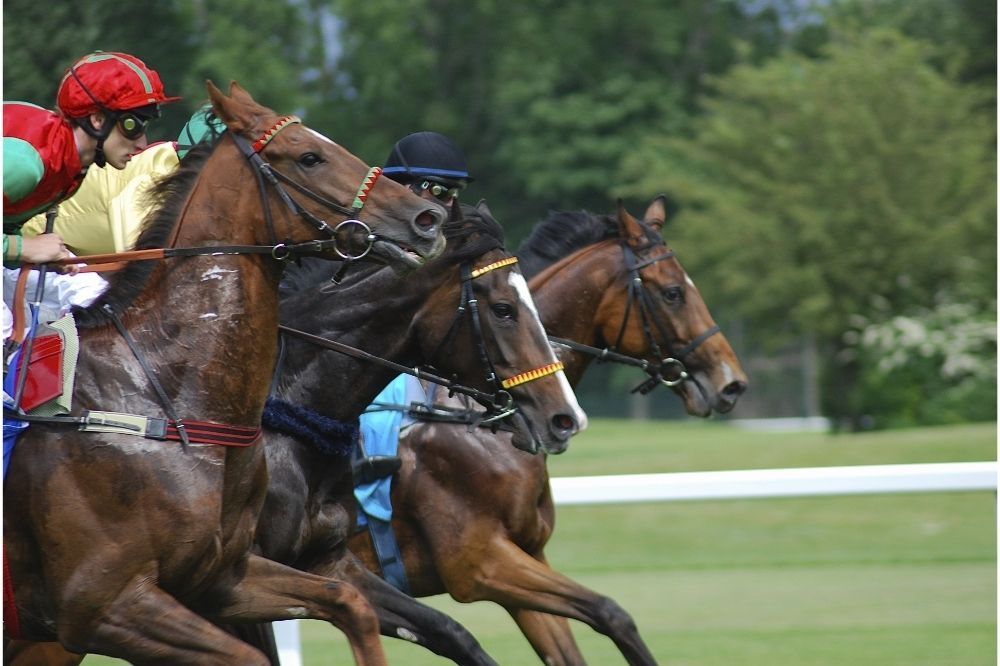Place a wager at Newbury Racecourse